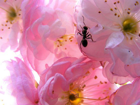 Nieuw in mijn Werk aan de Muur shop: Roze b loesem.