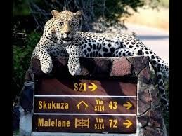 Kruger National Park- Skukuza Camp,  South Africa – My Heart