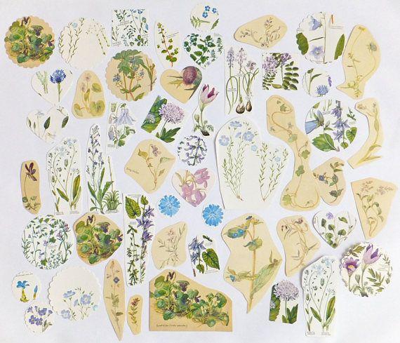 Lilac Flowers Paper pack Blues Purples Floral theme paper