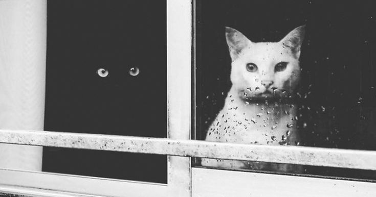 Some people say that if a black cat crosses the road, it's bad luck, while when a white cat crosses - it's good luck. Some people say the opposite. Either way, black and white cats are considered completely opposite, not only because of their color but the superstitions about them too.