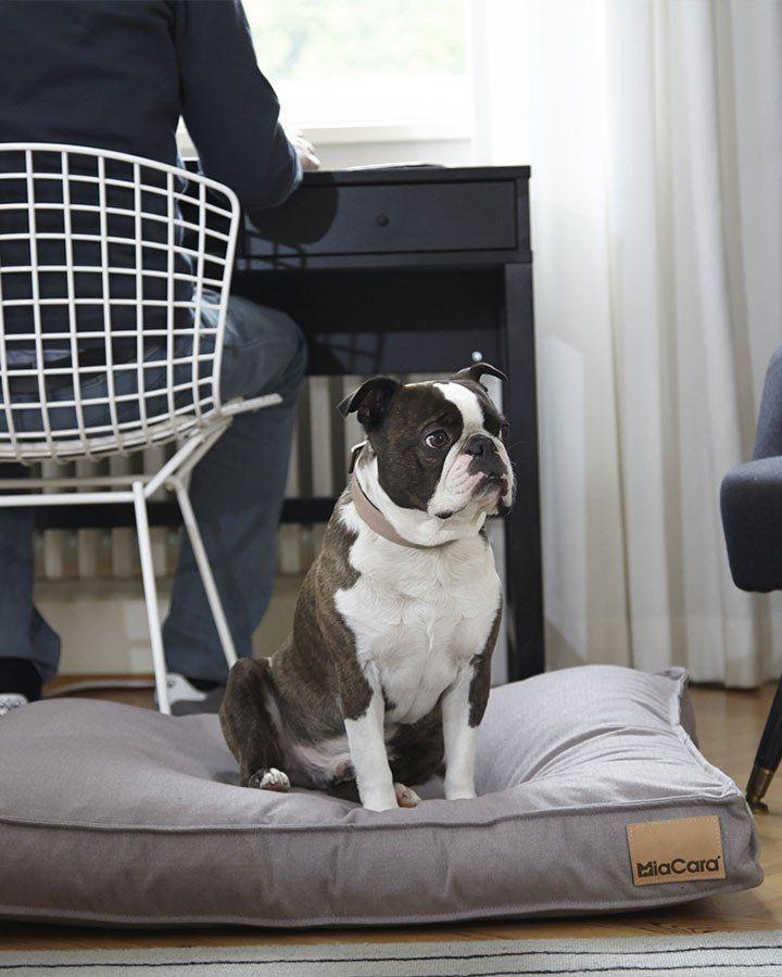 Hundepude (Pudder) - Lino - Petlux