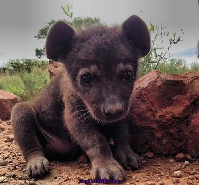 Baby Hyena: 63 Best Animal Selfie Images On Pinterest