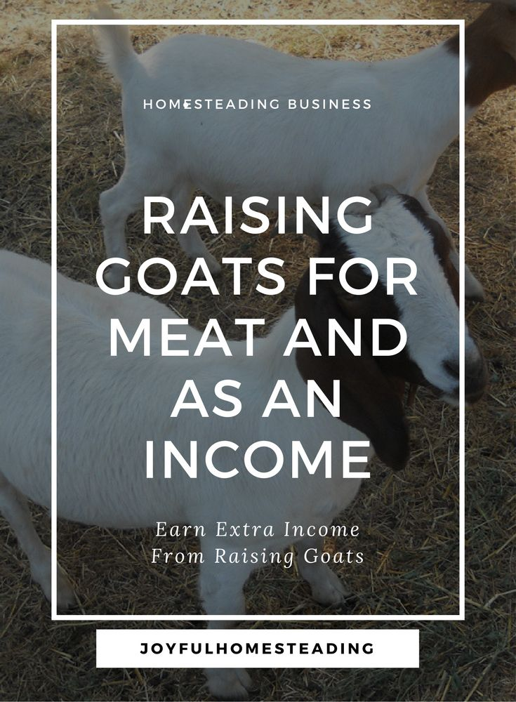 Boer goat farming is a great way to earn an income off your land, especially if you have a small acreage.