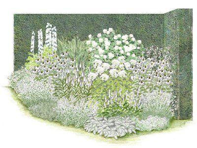 Iris-Paket \u0027Endlose Blütenfreude\u0027 Edle Schönheiten Rabatter