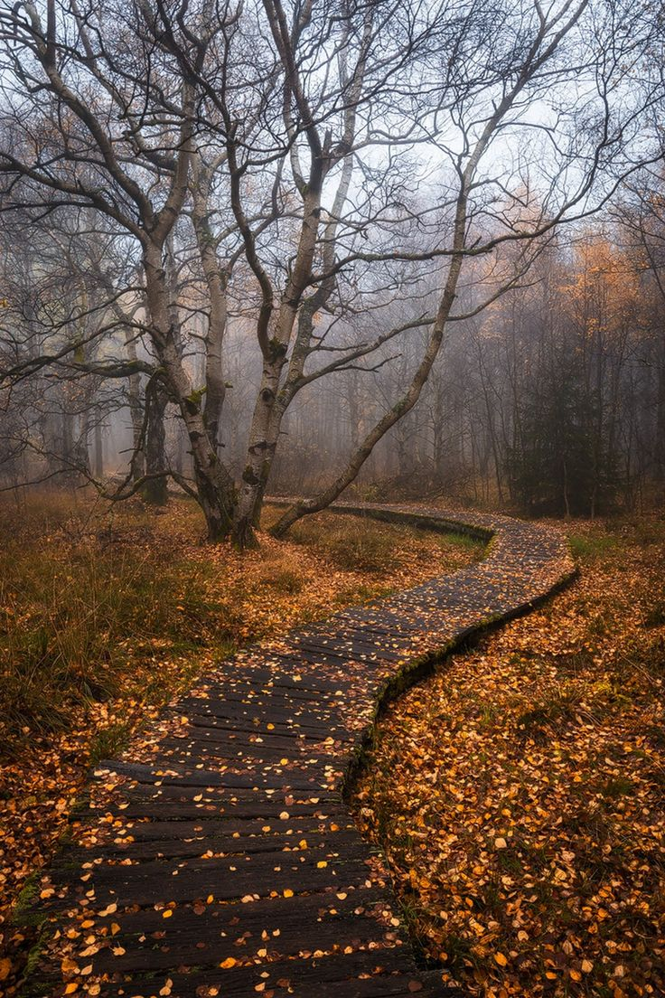 the end of fall - nature | autumn - leaves - path - natural - wilderness - wild - idea - ideas - seasons - fog - moody - inspiration - beautiful - nature photography