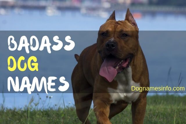 Owning A New Tough And Badass Dog Then Go Ahead And Pick A Name For Your Dog From The 800 Badass Dog Names We Gathe Dog Names Girl Dog Names Rottweiler Names