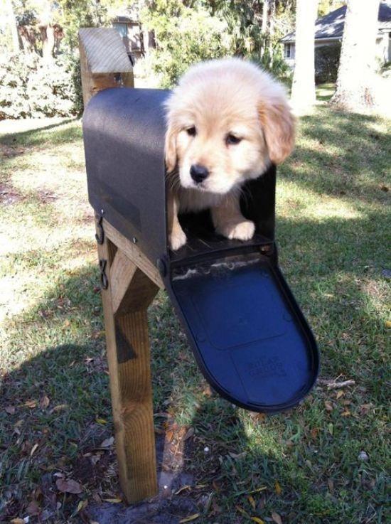 Cagnolino nella buca delle lettere ♥