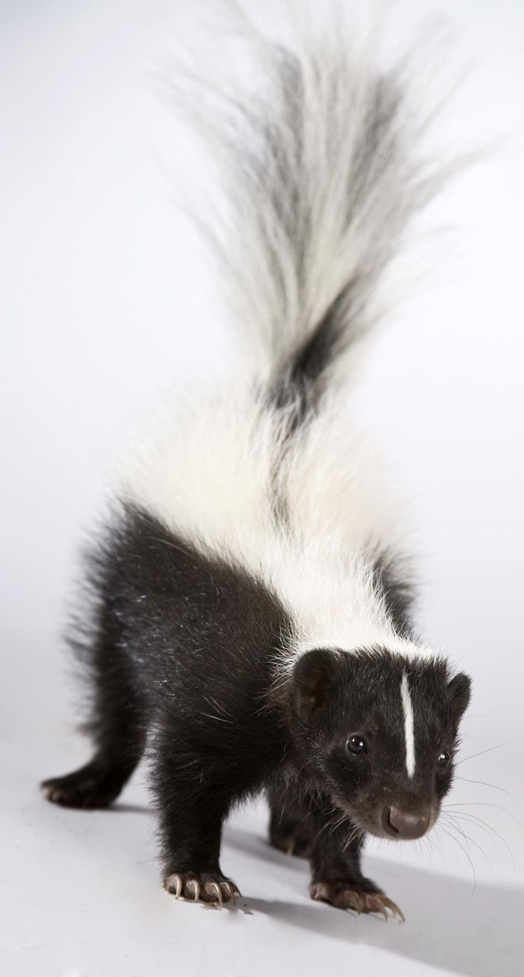 Best Way To Remove Skunk Smell From Dog