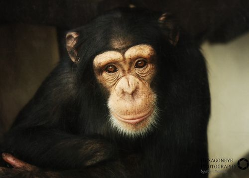 Monkey World - Rodders                                                                                                                                                                                 More