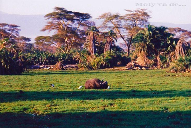 Sus espectaculares marismas! #Molyvade...#viaje #África #Kenia #Amboseli molyvade.blogspot.com