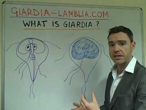 Giardia Lamblia- The Common Parasite - YouTube