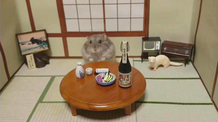 hamsters-bartenders-serving-tiny-food-and-drinks-15