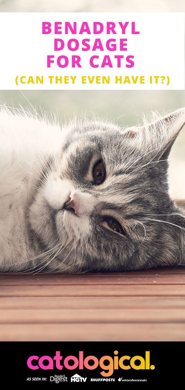Benadryl For Cats Dosage Benadryl for cats, Cat care, Cats