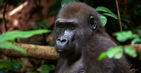 CongoCongo, Destinations, Africa