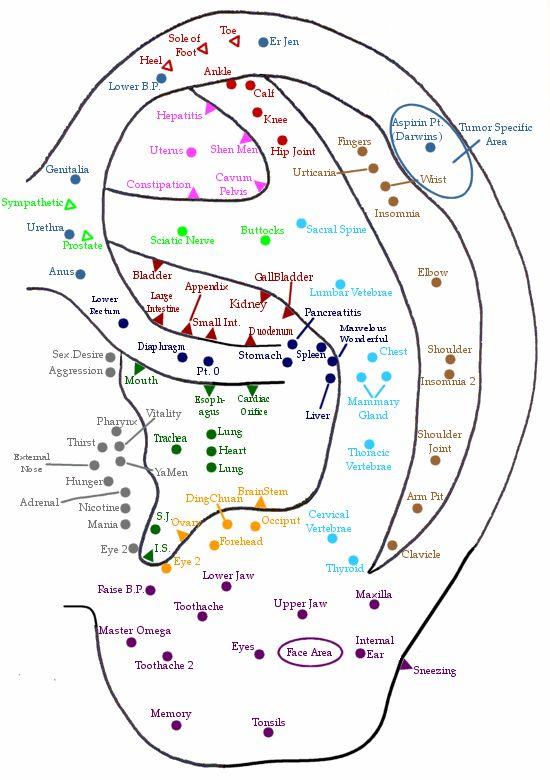 Ear / Auricular Acupuncture Points