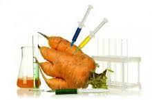A las plantas transgénicas se les insertan genes que se derivan de otras especies. Los genes insertados pueden ser de especies dentro del mismo reino (planta a planta) o entre reinos (por ejemplo, bacteria a planta). En muchos casos el ADN insertado debe ser ligeramente modificado para expresarse correctamente y eficientemente en el organismo huésped. Las plantas transgénicas se usan para expresar proteínas como las toxinas Cry de B. thuringiensis, los genes resistentes a los herbicidas…