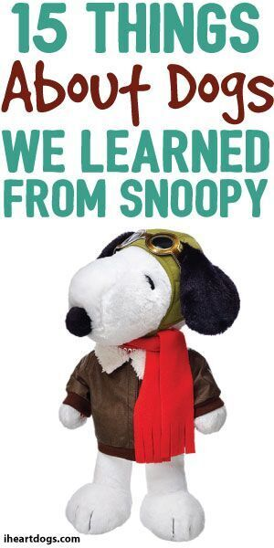 15 Things About Dogs We Learned From Snoopy