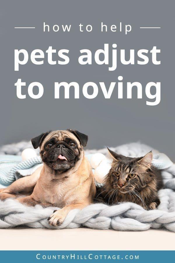 So helfen Sie Haustieren, sich an den Umzug zu gewöhnen – Tipps und kostenlose druckbare Checkliste, #Adjust #CatSuppliesche …   – CAT SUPPLIES