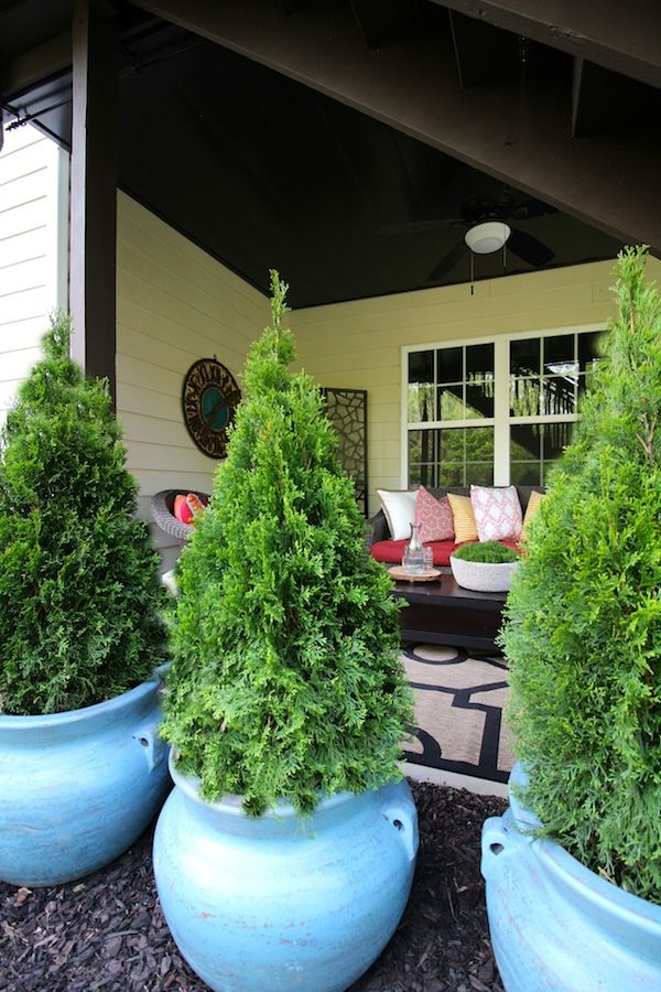 Best 25 Potted Trees Ideas Patio
