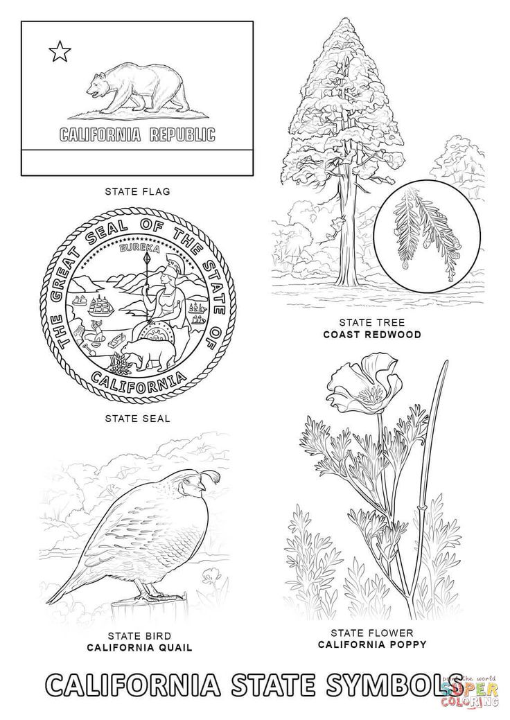 california state symbols coloring page from california category select from 26373 printable crafts of cartoons nature animals bible and many more