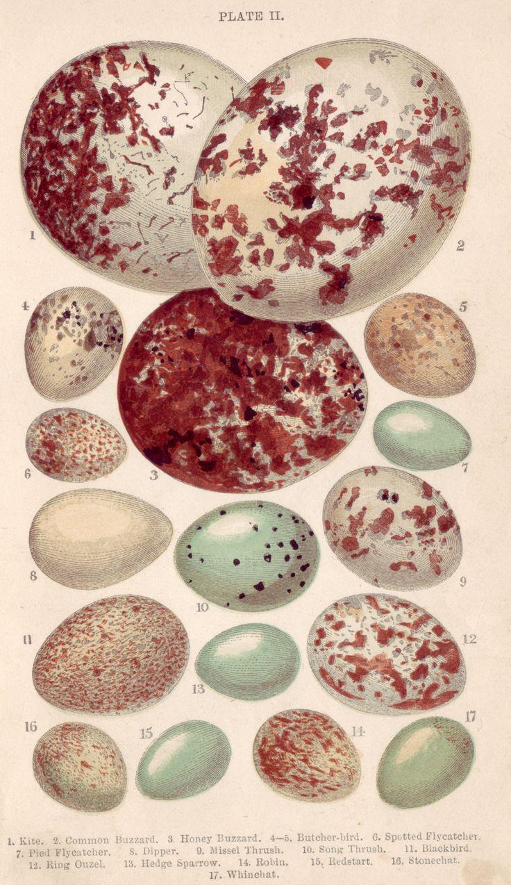 eggs #eggs