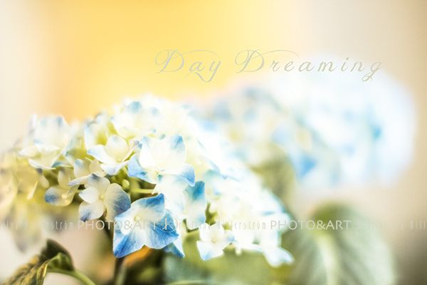 "https://flic.kr/p/curPZy | Day Dreaming | ""I dream my painting and I paint my dream."" ― Vincent van Gogh"