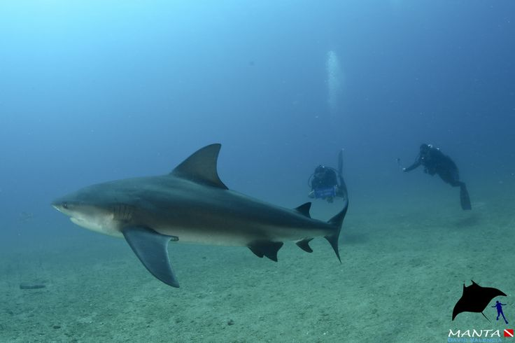Photobomb by 9 ft Bull #Shark