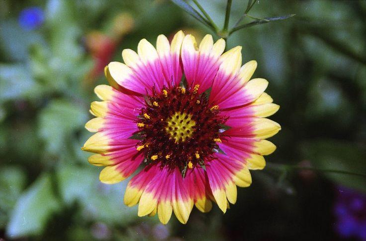 Wild FlowersWild Flower