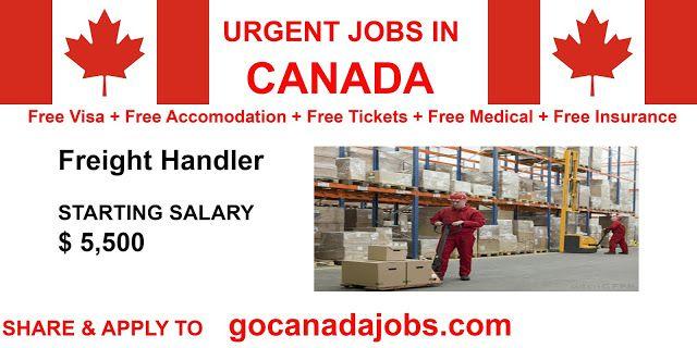Freight Handler Job Search In 2020 Job Career Future Jobs Job