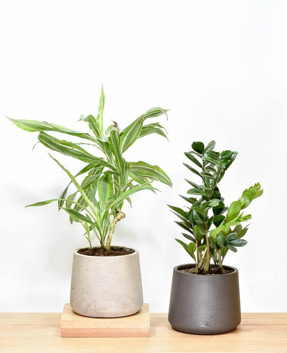 Medium Concrete Planter Planter With Drainage Cement Etsy Indoor Planters Concrete Planters Orchid Pot