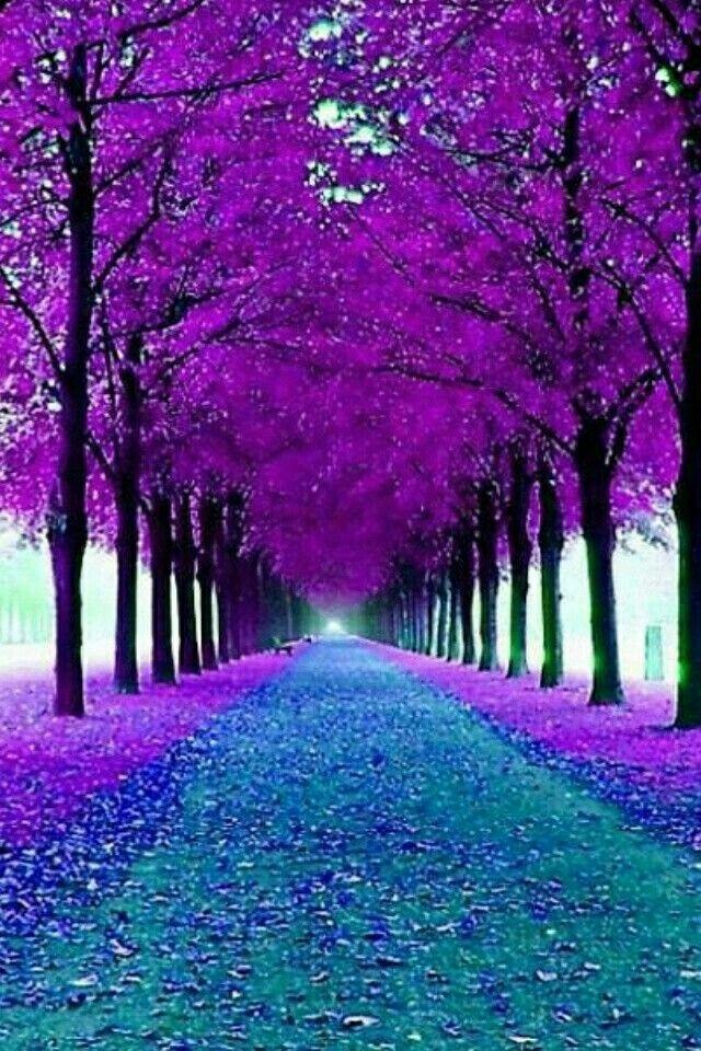 Árboles morados | Purple trees
