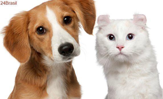 Multa para quem abandona animais pode ficar mais alta em Joinville