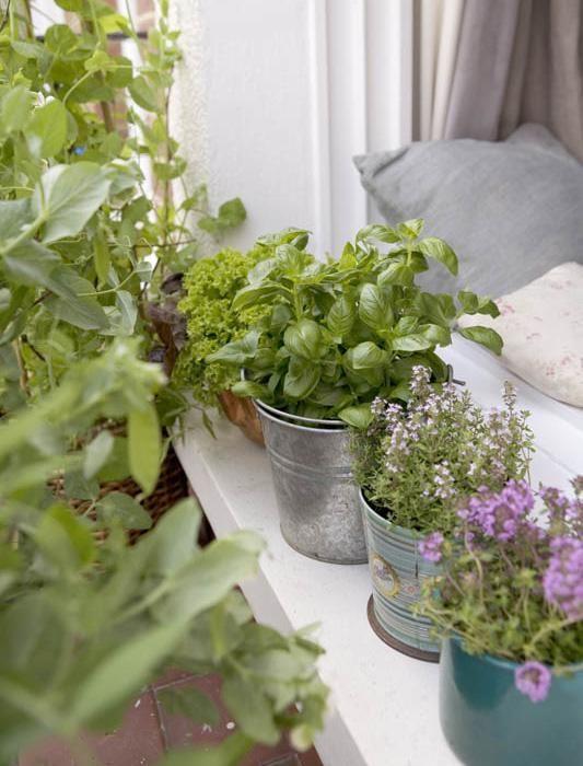 Edibles in the balcony. | Image via: Gardenista