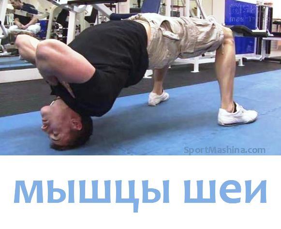 """Упражнения для мышц шеи    Ни одна часть тела не демонстрирует физическую мощь так зримо и наглядно, как крепкая мускулистая шея. И не удивительно, ведь эта группа мышц всегда на виду. Сильные мышцы шеи играют ключевую роль во многих видах спорта. Например, в контактных. Мощная шея не позволит сопернику оторвать вам голову и унести с собой в качестве """"трофея"""". Но даже если в ваши планы не входит поединок с чемпионом мира по греко-римской борьбе, регулярный тренинг шейной мускулатуры не…"""