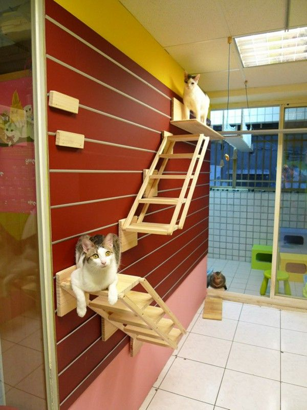 Cat climbing wall shelves and steps