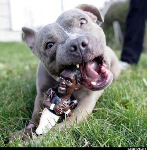 Michael Vick Chew Toy =) .... Turnabout is fair play...  I think this is great