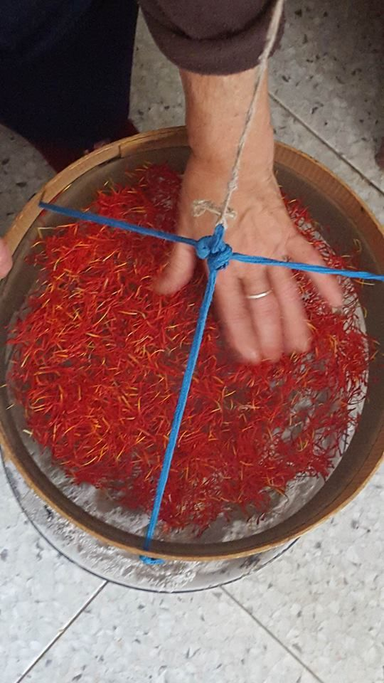 And now dry the red pistils on the warm ash In questa fase si fa esiccare lo zafferano su un setaccio sopra la cenere calda #Abruzzo #travel #italy #navelli #zafferano #saffron #abruzzosegreto #zafferanodellaquiladop