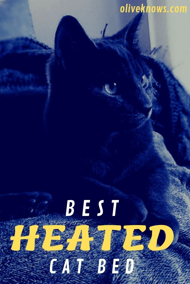 How To Choose The Best Heated Cat Bed Heated Cat Bed Cat Exercise Cats