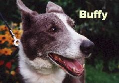 Buffy - rescued from Catterick Garrison back in the 90's
