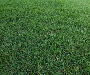 Easily Getting Rid of Dead Spots on Your Lawn, Effortlessly!