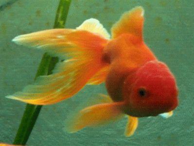 i pesci rossi che vivono in un acquario in una casa percepiscono il terremoto?Grazie Rita Vagnozzi
