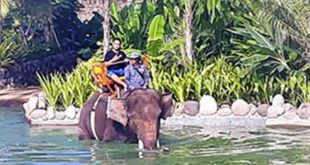 Bali Zoo Short Trek Elephant Ride Expedition Package