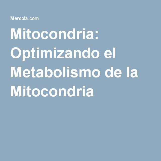 Mitocondria: Optimizando el Metabolismo de la Mitocondria
