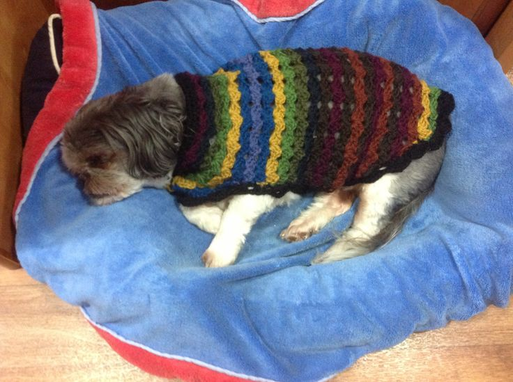 Crochet dog coat. Demelza in her Pjs.