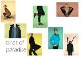Birds of paradise Moodboard