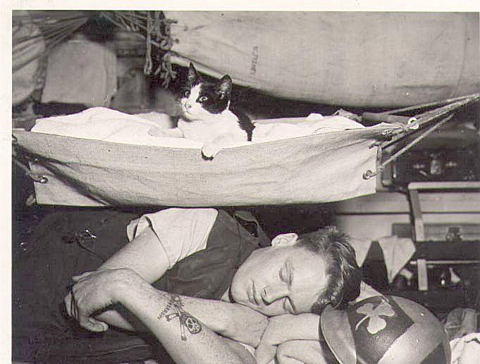 Kitten... HMCS Iroquois.. 1944. (photo source: myrcn.ca )