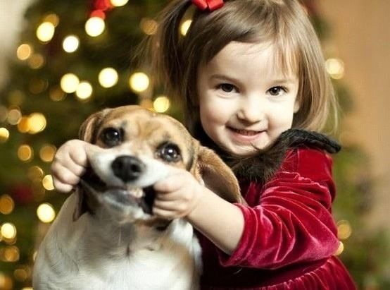 : Funnies Pictures, Pet, Funnies Photo, Funnies Pics, Smile Dogs, Puppys, Poor Dogs, Christmas Card Photo, Animal