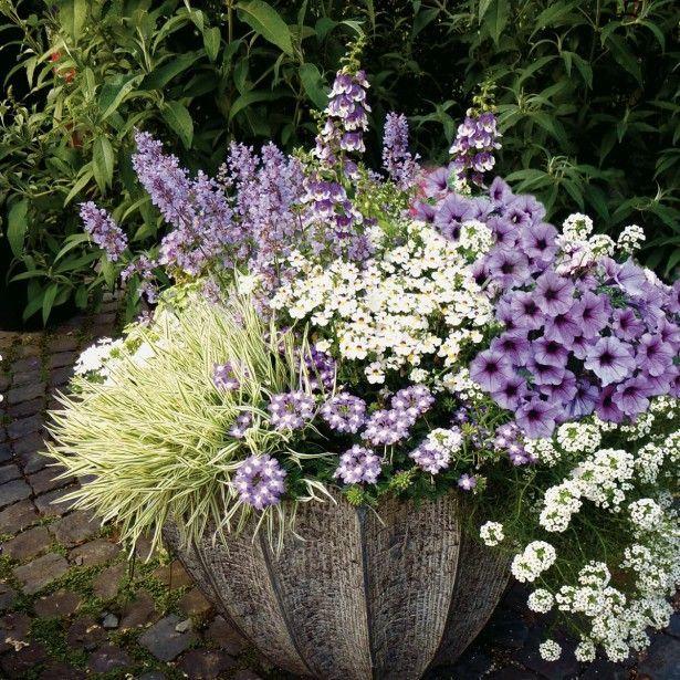 Collection Jardinière Bleue - 7 variétés d'annuelles