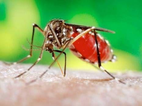 La question de la semaine : Est-on à l'abri du virus Zika ? :http://sahti-dz.com/portail/question-de-semaine-on-a-labri-virus-zika/