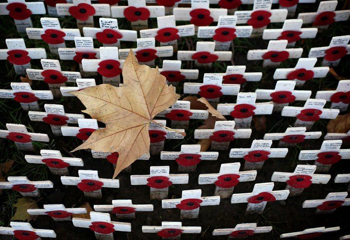 A leaf sits atop crosses placed in the Royal British Legion Field of Remembrance.